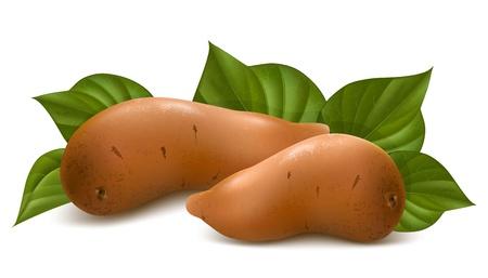 s��kartoffel: Vector. S��kartoffel mit Bl�ttern.