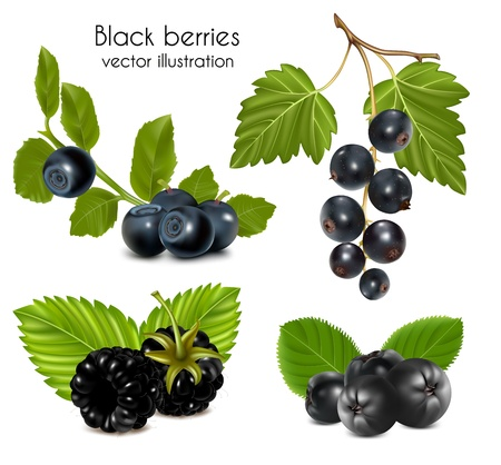aronia: Photo-realistic vector illustration. Set of black berries with leaves. Illustration