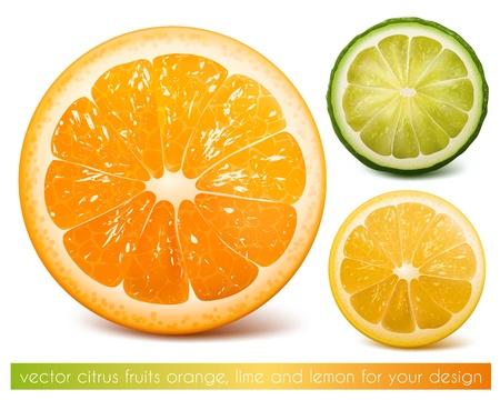 Vector citrus fruits: orange, lime and lemon. Vector