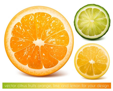 orange slices: Vector citrus fruits: orange, lime and lemon.