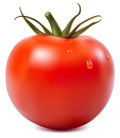 Illustrazione vettoriale fotorealistiche. Pomodoro con gocce d'acqua.