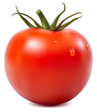 Photorealistic vector illustration. Tomato with water drops.