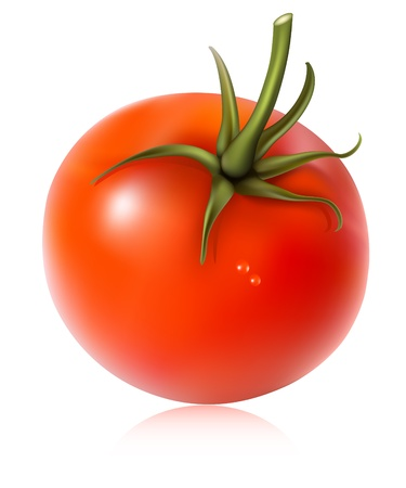 Photorealistic vector illustration. Tomato with water drops. Stock Vector - 10053324