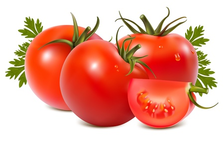 photorealistic: Photorealistic vector illustration. Tomato with water drops.
