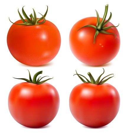 Tomato with water drops. Photo-realistic vector illustration.