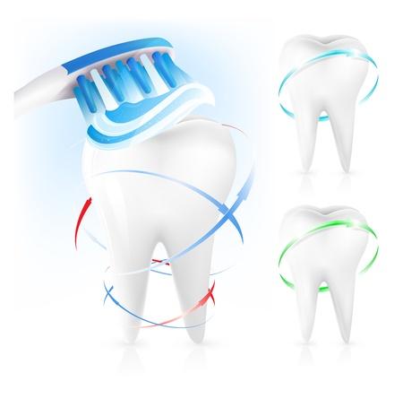 fluoride: Vector. Concepto dental. Dientes blancos, cepillo de dientes y dent�frico. Vectores