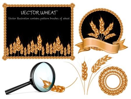 Vector wheat ears collection Vector