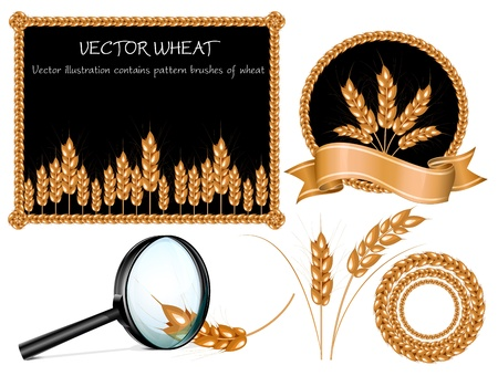baguette: Vector wheat ears collection