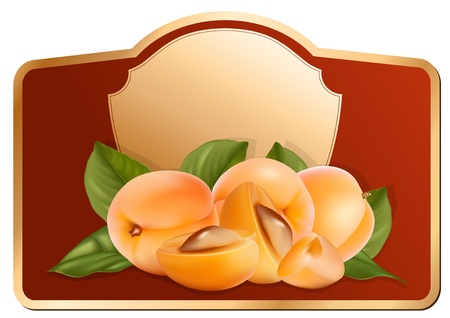 Vector. Design of packing jam jar with photo-realistic vector apricots.