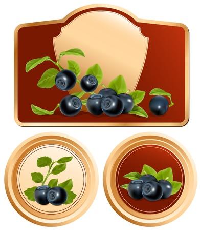 Vector. Fondo per la progettazione di imballaggio barattolo di marmellata con foto-realistiche mirtillo.