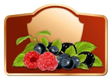 fruit jam: Vector. Background for design of packing jam jar with photo-realistic forest berries.
