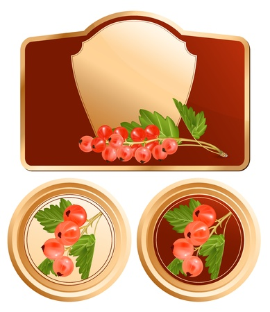 currants: Vector. Background for design of packing. Jam jar with copy space for you text. Red currant.