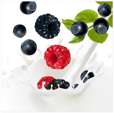 Vector. Rijpe bosbessen vallen in de melkachtige splash. Achtergrond voor het ontwerp van de verpakking yoghurt.