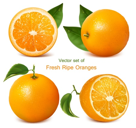 Vector set of fresh ripe oranges with leaves.