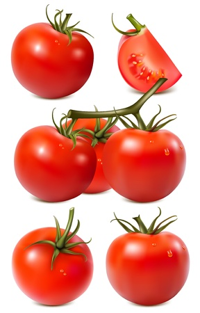 Vector collection of red ripe tomatoes with water drops. Vector