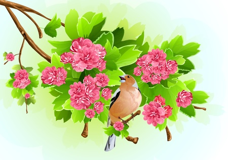 Bird on the flowering branch. vector illustration Illustration