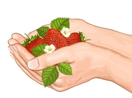 give: Hands holding red ripe strawberries. vector illustration