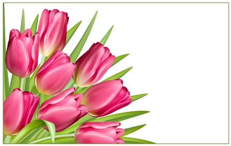 Gift frame with pink tulips Stock Vector - 18403813