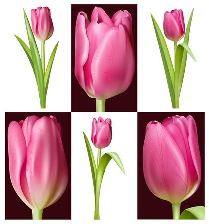 celebrate life: Tulipanes de color rosa Vectores