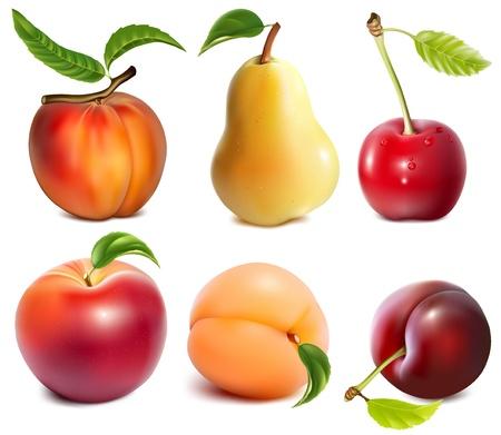 복숭아: 벡터 과일의 컬렉션 일러스트