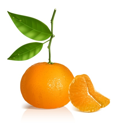 citrus:  Fresh tangerine fruits with green leaves