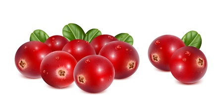 Cranberries with leaves and water drops Vector