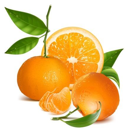 Ilustración vectorial fotorrealista. Frutas frescas de mandarina y naranja con hojas verdes y rodajas.