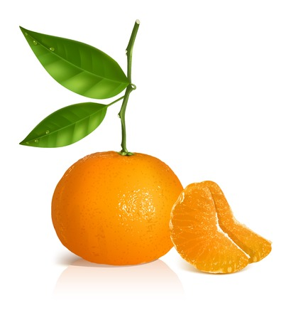 Photo-realistic vector illustration. Fresh tangerine with green leaves and slices.
