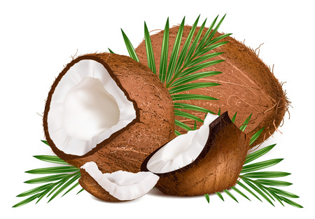 coconut: Coconuts with leaves. Vector illustration. Illustration