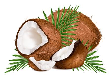 Noix de coco avec des feuilles. Vector illustration. Vecteurs