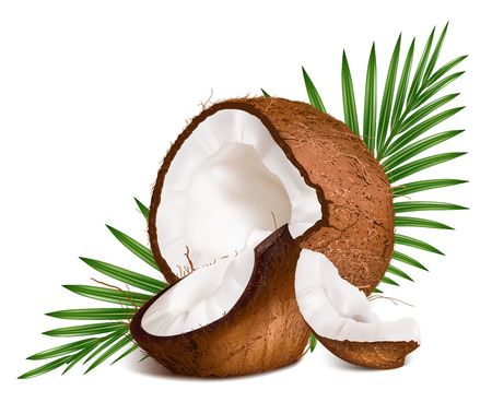 coconut: Coconuts with leaves. Vector illustration.