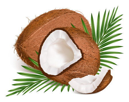 Coconuts with leaves. Vector illustration.  Vector