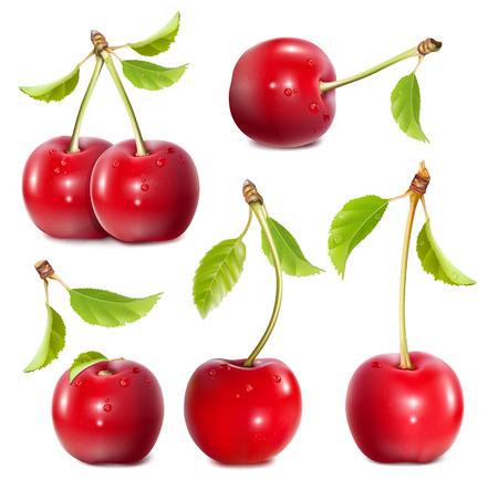 Ripe red cherries. Vectores