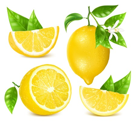 Fresh lemons with leaves and blossom. Stock Illustratie