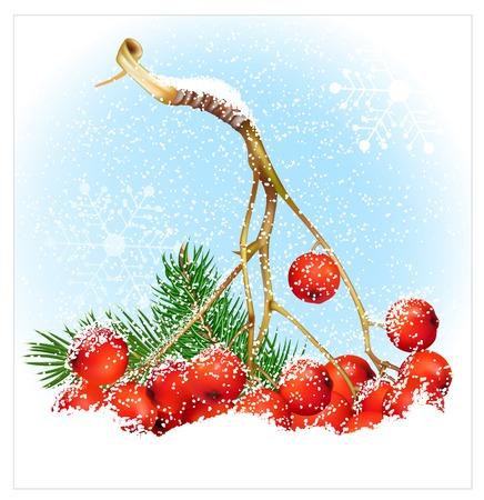 rowan: Christmas snow background with rowan.