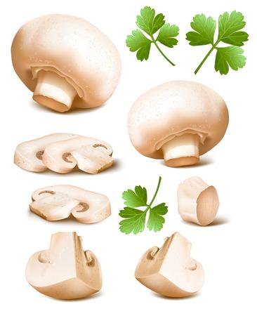 mushrooms: Mushrooms with parsley. Illustration