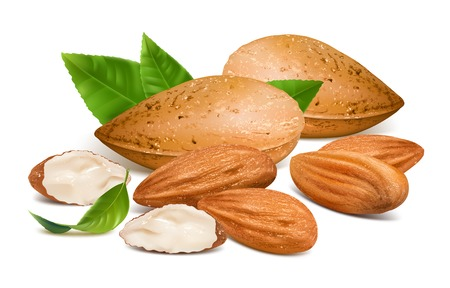 Almonds Stock Illustratie