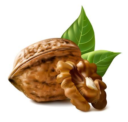 クルミ  イラスト・ベクター素材