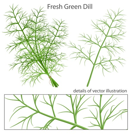 dill: Fresh and green dill.