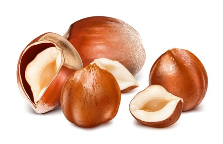 Hazelnuts with leaves. Ilustração