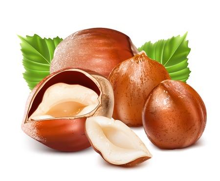 Hazelnuts with leaves. Stock Illustratie