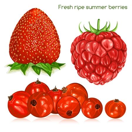ripe: Fresh ripe summer berries.