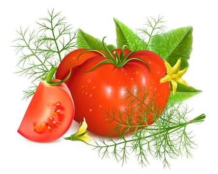 slice: Red ripe tomatoes with dill. Illustration