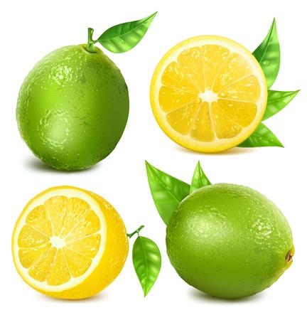 lemon slices: Fresh lemons and limes with leaves. vector illustration