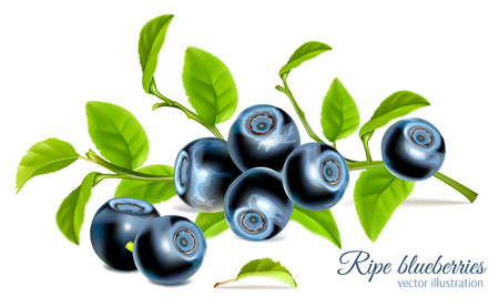 Blueberries with leaves Stock Illustratie