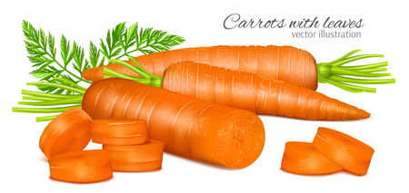 carrot: Carrots with leaves Illustration