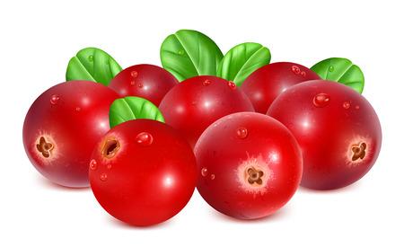 熟した: 熟した赤いクランベリーの葉を持つ  イラスト・ベクター素材
