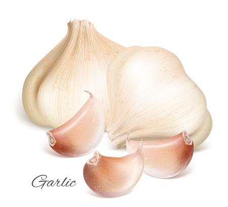 fresh garlic: Garlic with slices Illustration