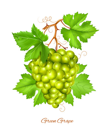 rich in vitamins: Green grape cluster with green leaves.