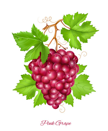 rich in vitamins: Grape cluster with green leaves.